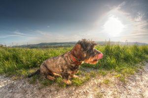 Tierfotografie Alfeld